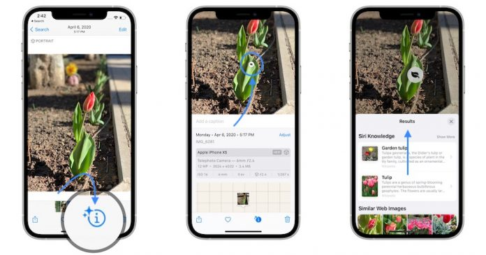 Use Visual Look Up in iOS 15